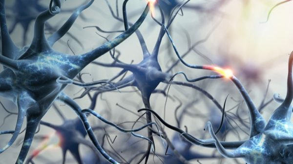 Neural network. Neurons brain connections. 3d illustration. ; Shutterstock ID 450156736