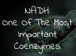 NADH: One Of The Most Important Coenzymes
