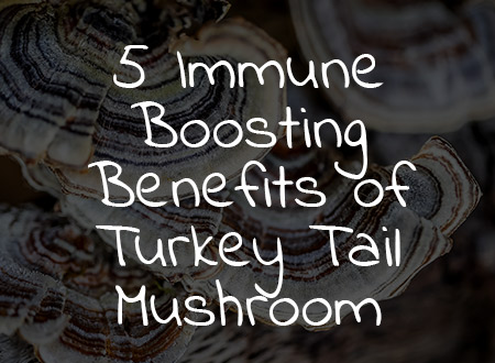 5 Immune-Boosting Benefits of Turkey Tail Mushroom
