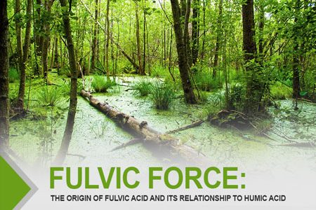 Fulvic Force: The Origin Of Fulvic Acid And Its Relationship To Humic Acid