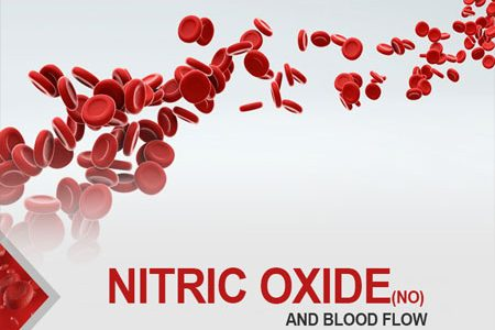 Nitric Oxide(No) And Blood Flow