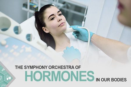 The Symphony Orchestra Of Hormones In Our Bodies