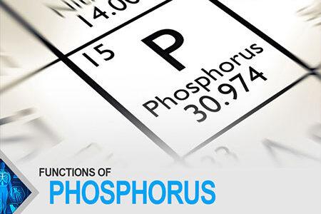 Functions Of Phosphorus