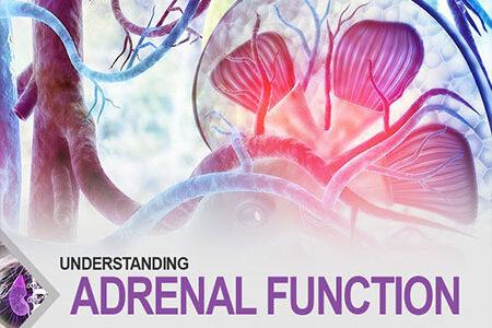 Understanding Adrenal Function
